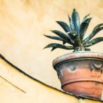 The Secret Lives of House Plants