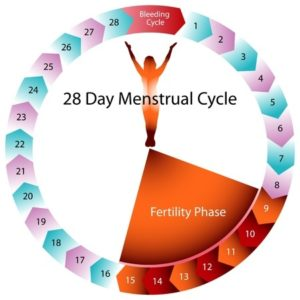 Creating the 28 day cycle